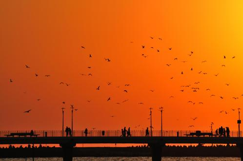 birds over pier